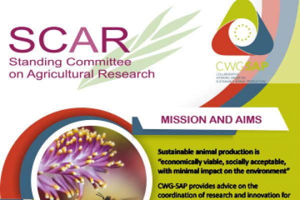 CWG-SAP banner roll up